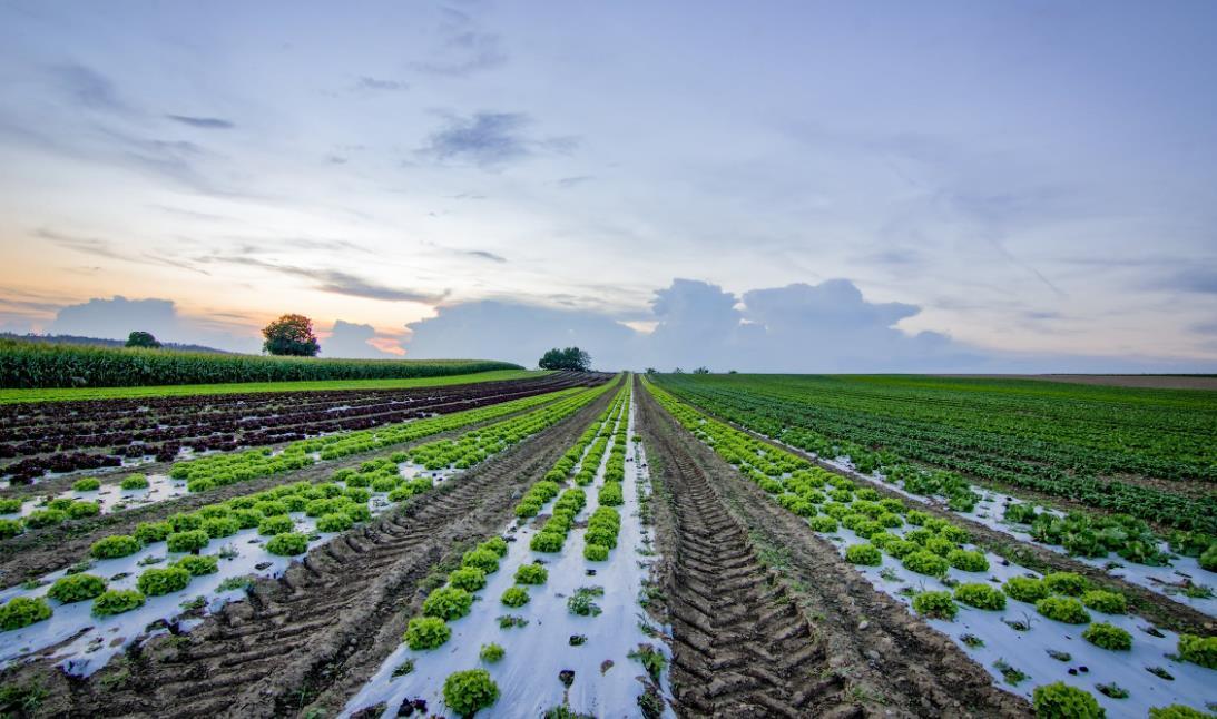 Finanziellen Erfolg mit Ackerland in Rumänien