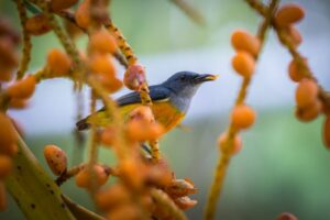 Reges Treiben im Garten: Vögel bei der Nahrungssuche unterstützen